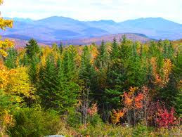 New Hampshire forest images Autumn in new hampshire i susan mellen foundmyself jpg
