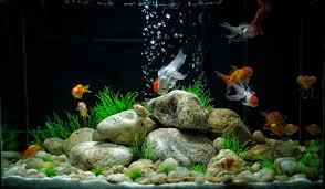 images for u003e cool goldfish tank ideas for the kid pinterest