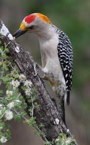 4219 best nature beautiful birds images on pinterest beautiful