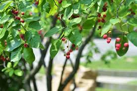 sweet in the front yard juneberries kitchn