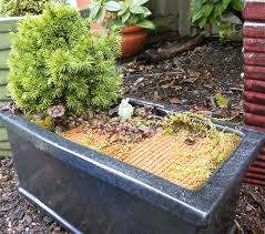 Plants For Patio by Miniature Garden Plants Secrets To Success The Mini Garden Guru