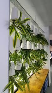 27 best indoor plants interest pieces images on pinterest