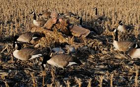 Goose Layout Blind Avery Outfitter Layout Blind Grand View Outdoors