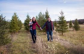 christmas tree farm family picture session new jersey