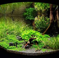 Aquascaping Competition Marcel Dykierek And Aquascaping Aqua Rebell