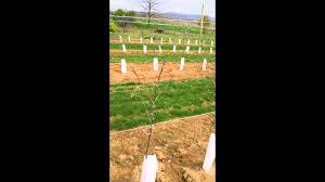 high density planting trellis installation at hollabaugh bros