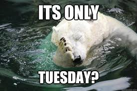 Tuesday Funny Memes - its only tuesday meme lekton info