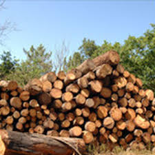 american united wood inc tree services 2945 richmond ter