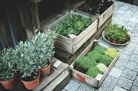 10 practical ideas for eco friendly plant pots treading my own