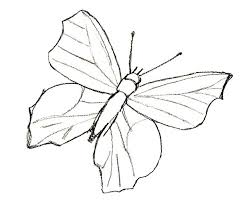 how to draw a butterfly draw by