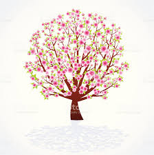 cherry blossom tree stock vector more images of blossom