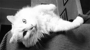 gatti divani arredare casa tessuti a prova di gatto il rivestimento ideale