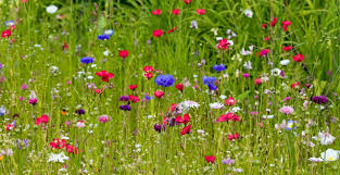 giving nature a home in our garden sowing wildflowers growing