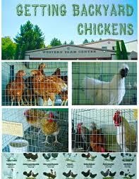backyard chickens for sale how to build a chicken coop raise backyard chickens dear