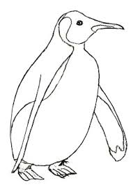 how to draw a penguin draw step by step