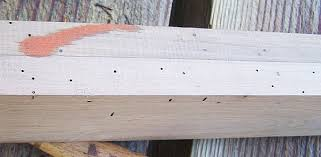 Powder Post Beetles In Hardwood Floors - brown rot white rot and other wood pestilence