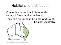 koala presentation