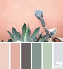 cacti color design seeds