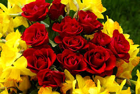 40 beautiful red rose pictures