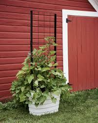 Restaurant Patio Planters by Patio Planters U0026 Container Gardens Gardeners Com