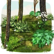 image amenagement jardin jardin de sous bois jardin extérieur jardineries truffaut
