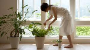 healthiest plants for your home health fresh air