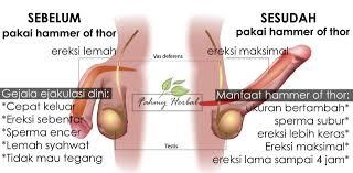 mengobati lemah syahwat fahmy herbal