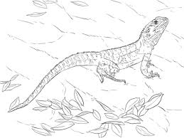 australian water dragon coloring free printable coloring pages
