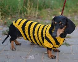 Mini Dachshund Halloween Costumes Dachshund Sweaters Etsy