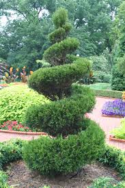 Horse Topiary Index Of Images Cool Pics Topiary