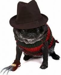 Scary Scary Halloween Costumes Halloween Dogs Tom Dwyer Automotivetom Dwyer Automotive