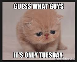 Tuesday Meme - it s only tuesday meme morning coffee deals giggles news chit