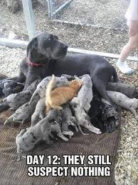 Great Dane Meme - 24 funny animal memes and pictures of the day cute daily lol pics