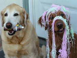 silly string dogs and their silly string
