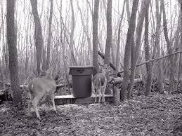 286 best deer and turkey feeders images on pinterest hunting