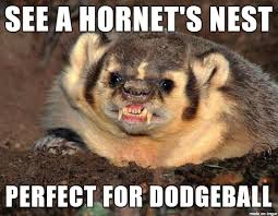 Meme Honey Badger - suicidal honey badger don t care meme on imgur