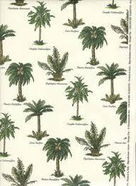 pygmy date palm tree cold hardy palms southern select palms