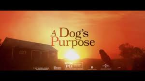 a dog u0027s purpose for rent u0026 other new releases on dvd at redbox