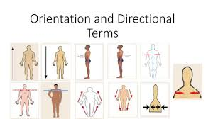 Picture Of Human Anatomy Body Human Anatomy Orientation And Directional Terms Youtube