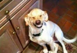Dog Smiling Meme - funny dog picture archives page 4 of 7 what breed is it