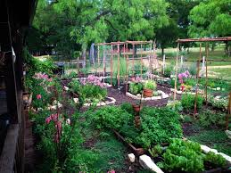 What Sets Permaculture Apart From Traditional Landscaping - Backyard permaculture design