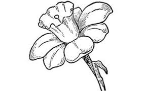 flower drawing best images collections hd for gadget windows mac