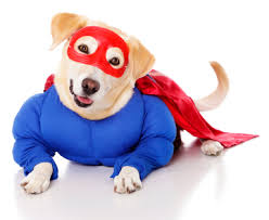 5 warnings about pet halloween costumes petswell pantry