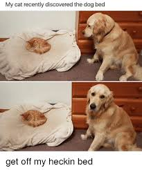 Dog In Bed Meme - my cat recently discovered the dog bed get off my heckin bed meme