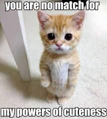 No You Are Meme - you are no match for my powers of cuteness cat meme picture