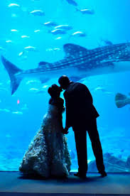 123 best georgia aquarium u003c3 images on pinterest georgia