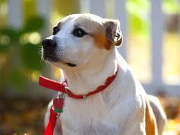 volunteering with dogs petfinder