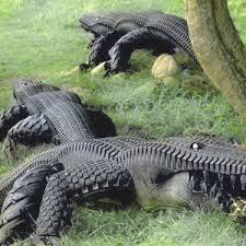 recycled tires equals alligators reclaim grow sustain