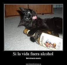 imagenes graciosas de amigos borrachos graciosas imágenes de gatos ebrios