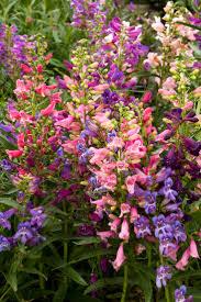 kansas native plants 20 best native nebraska plants images on pinterest nebraska
